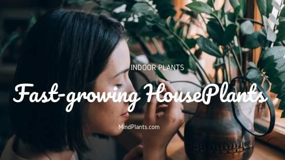 Fast Growing Plants