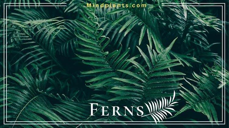 Ferns growing in dark