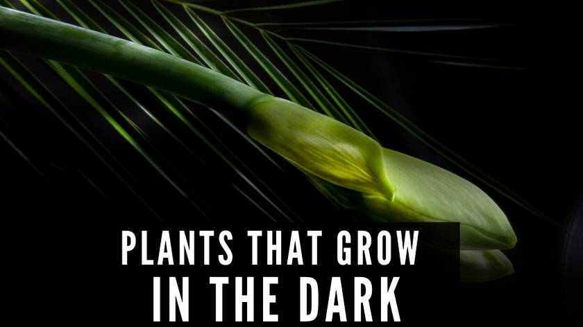 Plants that grow in the dark