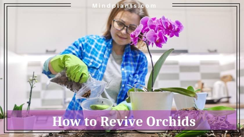 How to save dying orchids