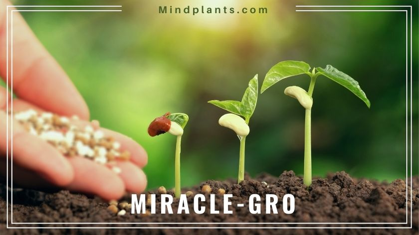 Does Miracle-gro go bad?