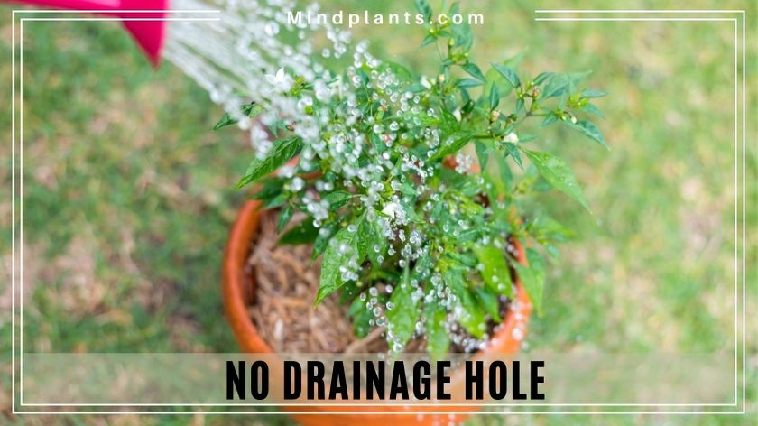 Plants the do not need drainage hole